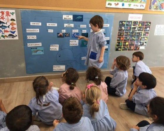 A P4 hem après moltes coses sobre les balenes.