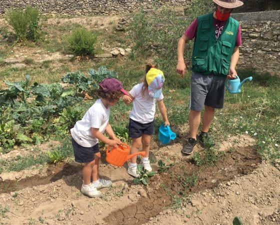 A P4C acabem el projecte de les plantes amb una excursió molt divertida